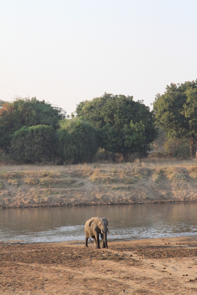 photographic-safari-lesson-007